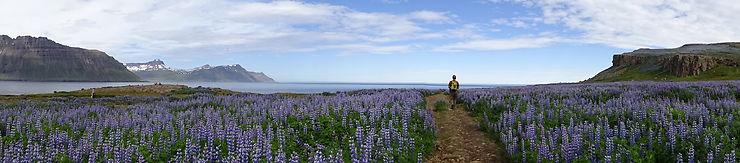 Seul au bout du monde, Islande