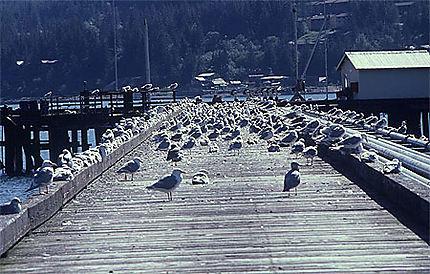 Juneau embarcadère