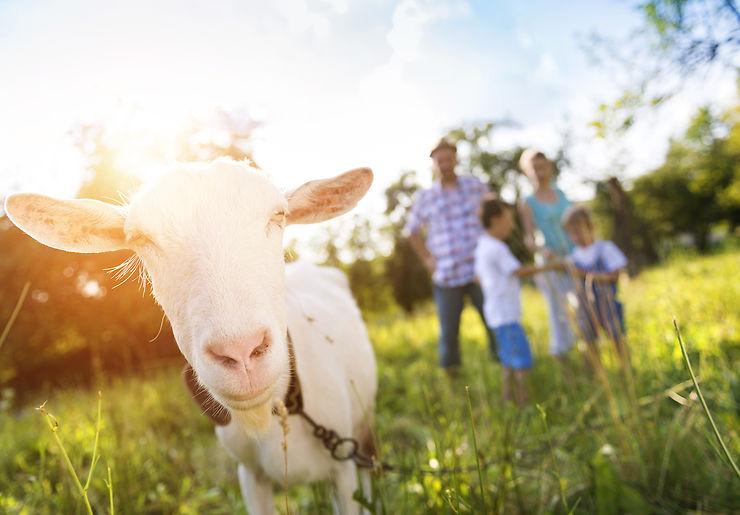 Provence - Découvrir l'agritourisme dans les Bouches-du-Rhône