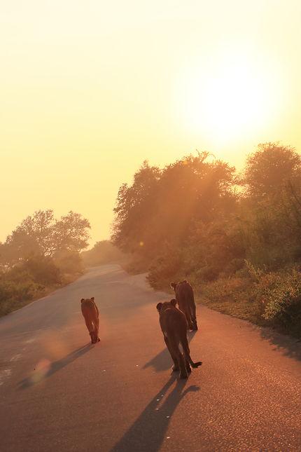 Levé de soleil sur le parc national du Kruger