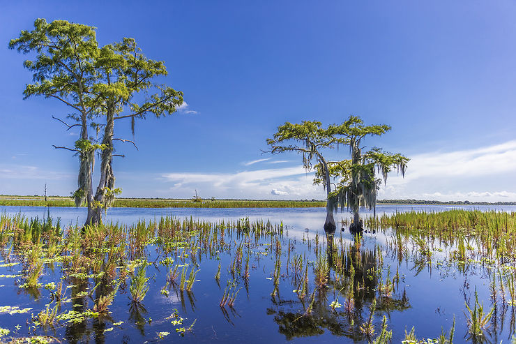 Everglades, la Floride au naturel