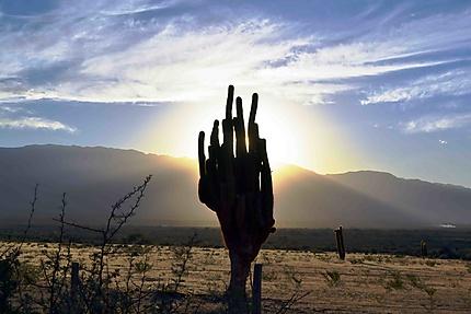 Les cactus d'Argentine