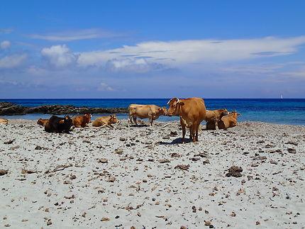 Sur la plage de Santa Maria Macinaggio