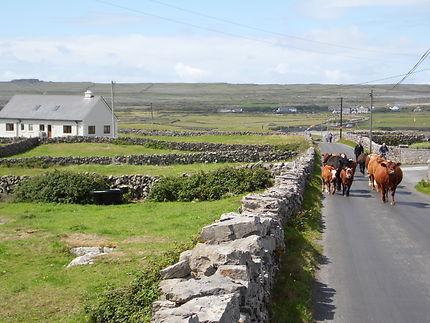 Sur les routes d'Inis Mór, en Irlande