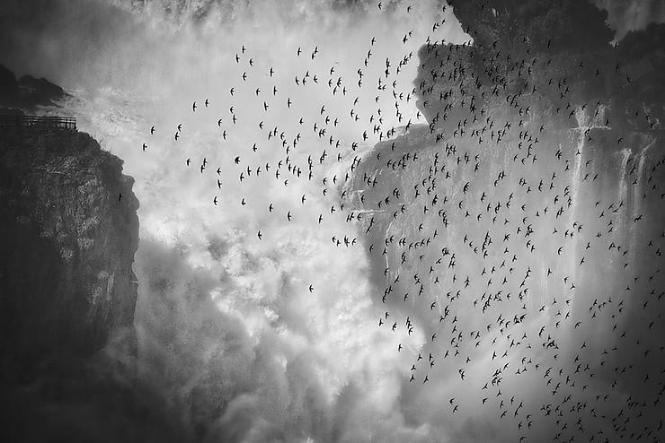 Martinets des chutes d'Iguaçu
