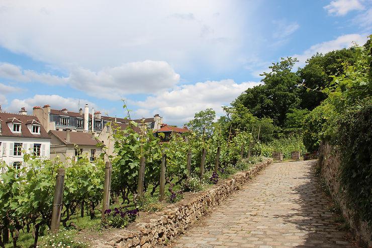 Quand la nature a droit de cité : les vignes de Montmartre