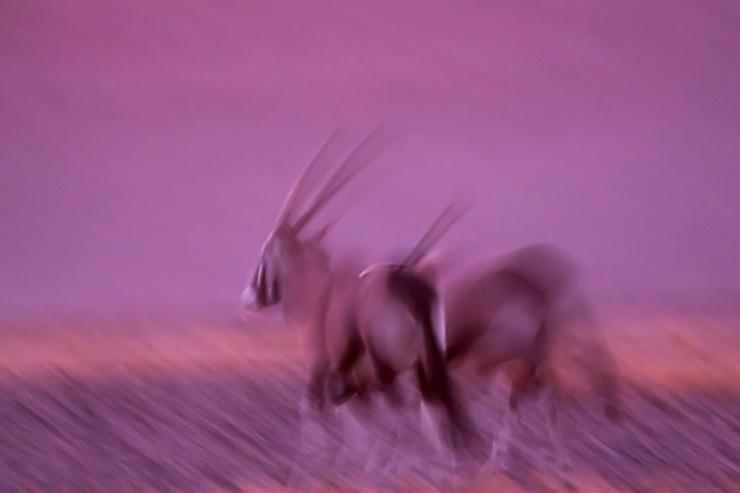 Couleurs folles, Namibie