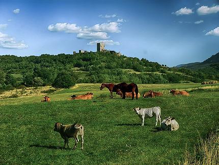 Chateau de Puivert, Aude