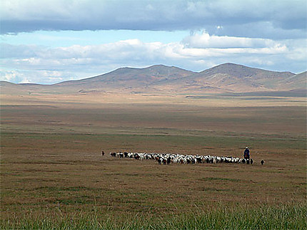 Berger dans l'immensité de la Mongolie