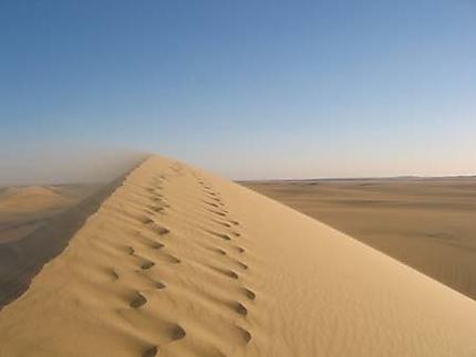 Une dune sous le vent
