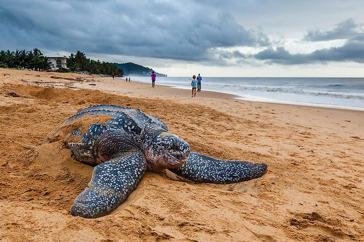 Les plages de Cayenne et Rémire-Montjoly