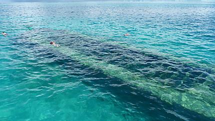 Snorkeling au dessus d'une épave