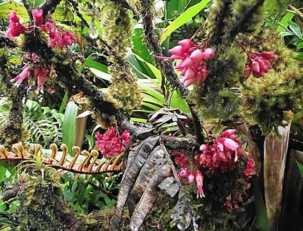 Végétation sur la Pelée