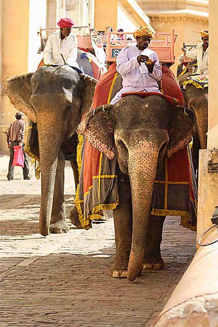 Série d'éléphants