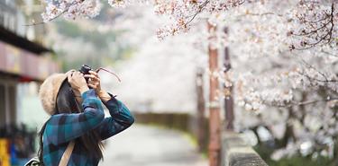 Éternel Japon - 14 jours