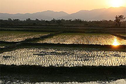 Couché de soleil sur les rizières
