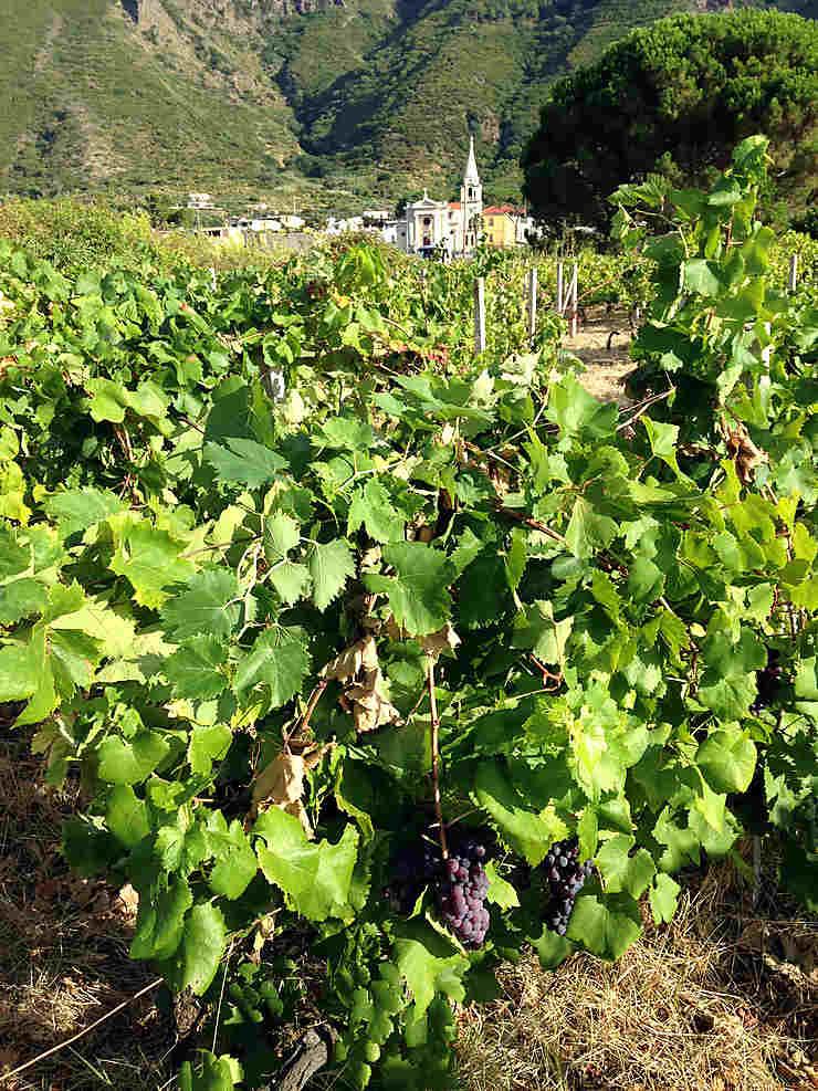 Salina, de vignes et de sentiers