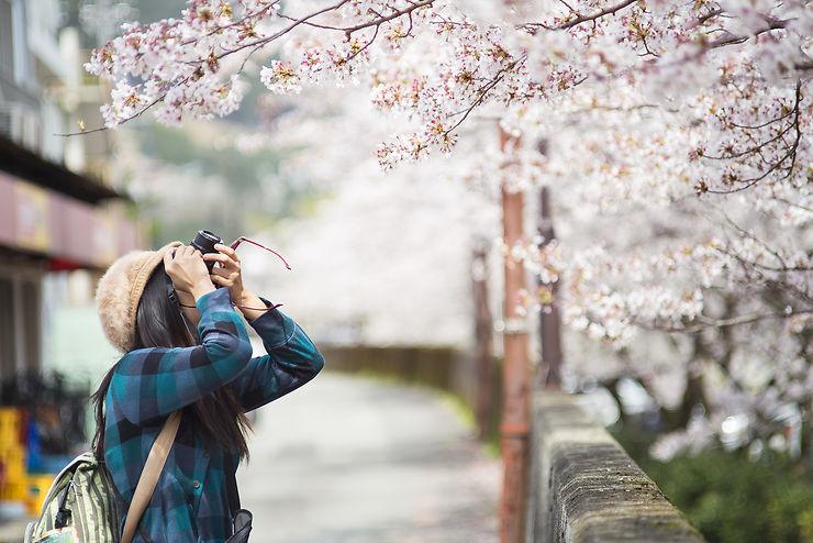 Les cerisiers en fleurs, près du palais impérial de Tokyo