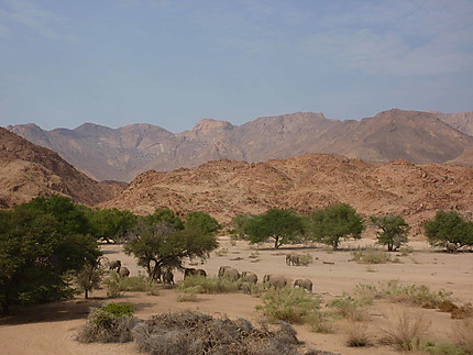 Eléphants du désert s'en allant