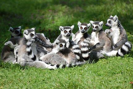 Lemur's Park