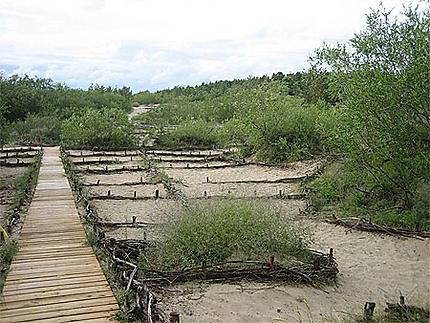 Promenades aménagées dans les dunes à Palanga