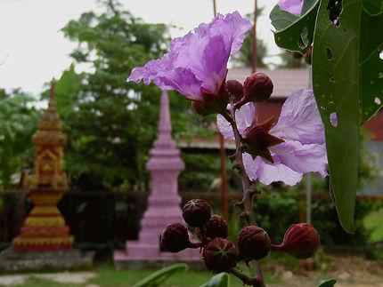 Couleurs du Laos, temple à Champassak