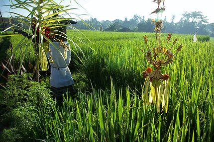 Offrandes à la Déesse Dewi Sri