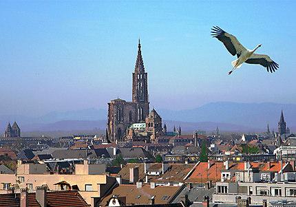 Photo des toits de Strasbourg avec la cathédrale
