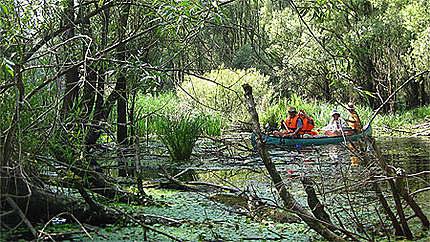 Amazonie danubienne