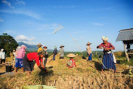 Le travail des paysans