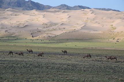 Paysage de dunes au Désert de Gobi