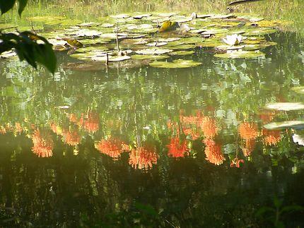 Jardin du peintre Van Beck à Beauvais