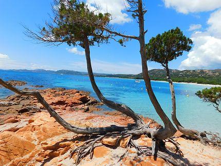 Paysage, plage de Palombaggia en Corse