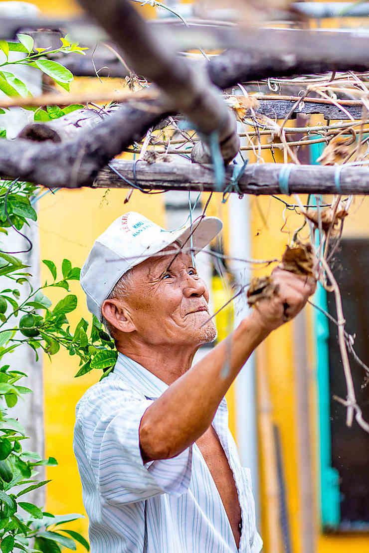 Le jardinier âgé