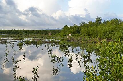 Mangrove près de l'aéroport