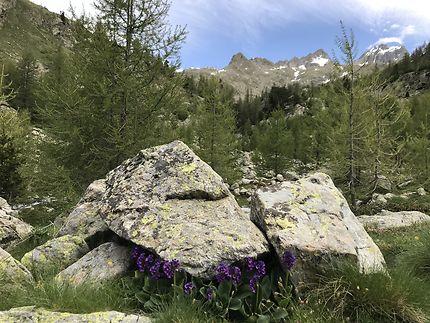 Randonnée vallon de fenestre
