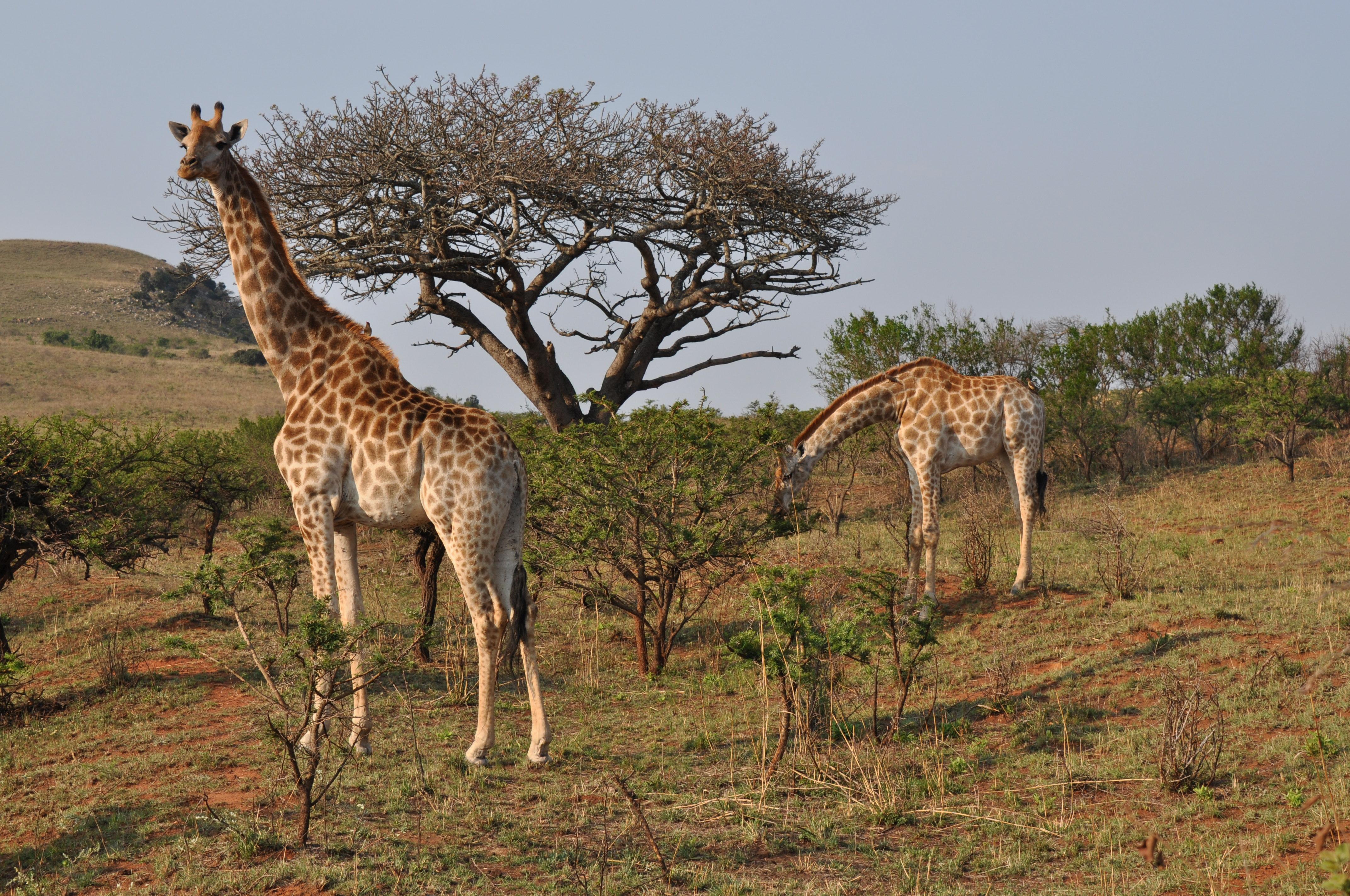 Parc national Kruger et réserves privées - Afrique du Sud