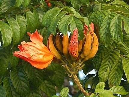 Fleur (?) Chichiriviche