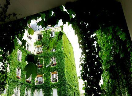 Mur d'immeuble végétalisé