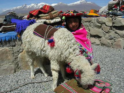 Alpagas de l'Altiplano