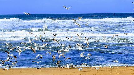 La Grande plage en Goélands