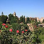 Alhambra en fleur