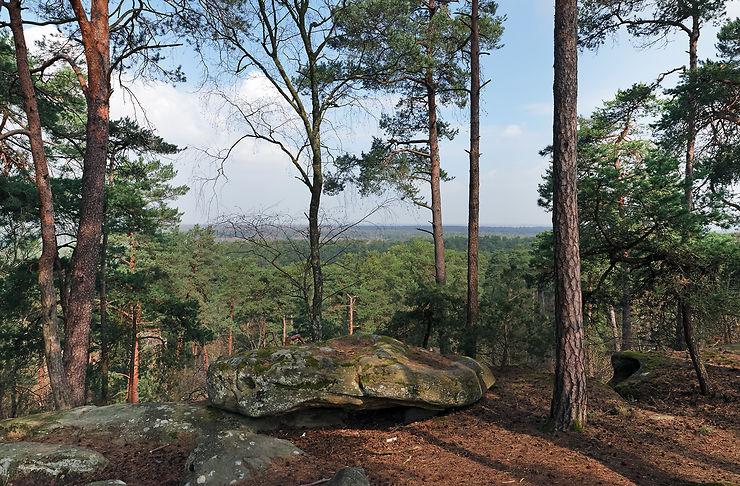 La forêt de Fontainebleau, sur les traces des peintres