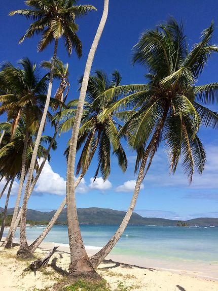 image des tropiques