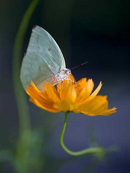 Butterfly park de Kuala Lumpur