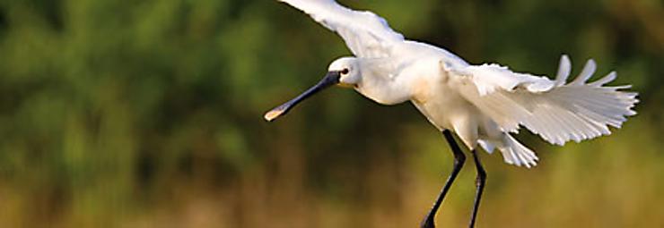 Où observer les oiseaux en France ?