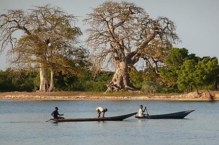 Pirogues et baobab
