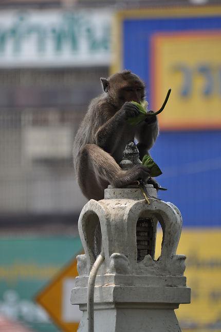 Bien installé le petit singe