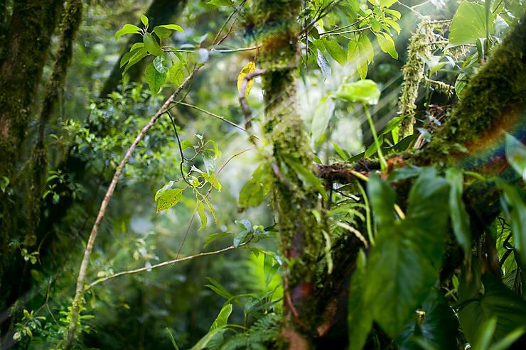 Costa Rica, la nature avant tout