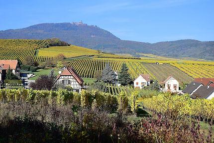 Vignoble et chateau près de Bergheim